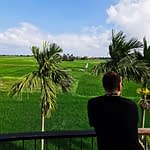 Pierce Overlooking the Rice Fields